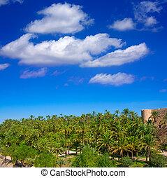 Elche Elx Alicante el Palmeral with many palm trees - Elche...