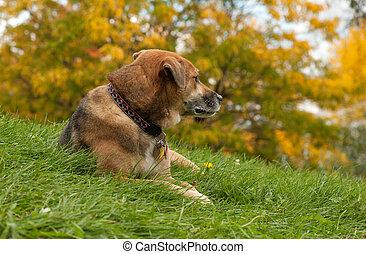 Elder Canine