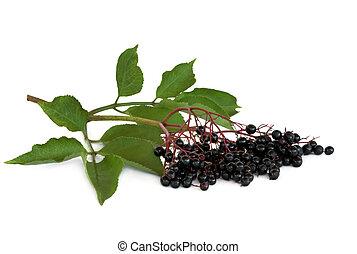 Elderberry fruit on leaf sprig over white background.
