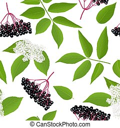 Elderberry Seamless pattern with twig, berries, leaves, flowers. Sambucus nigra. black elder plan