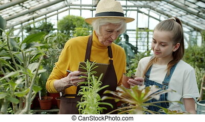 Elderly farmer is doing inventory in greenhouse when girl bringing pot plant talking discussing plantation with granny. Family business and farming concept.