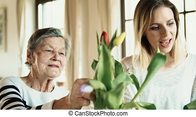 Elderly grandmother with an adult granddaughter at home.,...