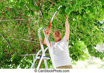 Elderly man cuts a tree branch