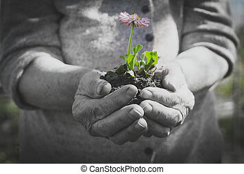 Elderly woman holding a flower in her hands.