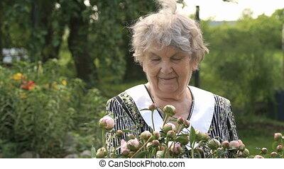 Elderly woman in the background of growing peonies - Elderly...