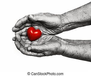 elderly woman keeping red heart in her palms isolated on...