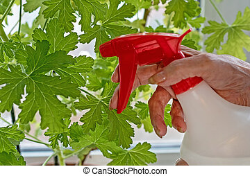 elderly woman watering her houseplant enjoying a beautiful day and daily chores