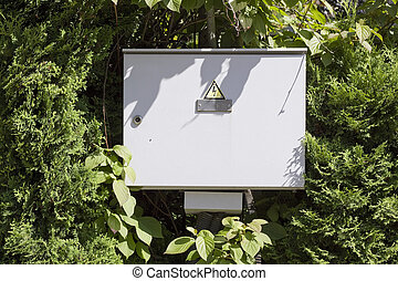 Electric box in the wood