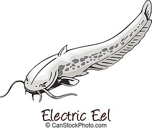 Electric Eel, Color Illustration