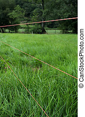 Electric Fence Wire - Three strands of orange electric fence...