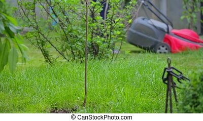 Electric Lawn Mower - The elderly owner of the house mows...