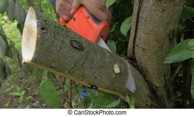 Electric power saw cutting off tree brunch