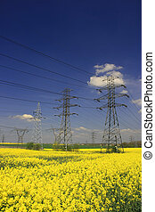 Rapeseed field and electric pylon - agriculture and industry