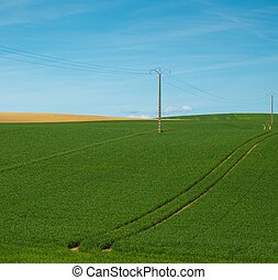 Electrical post in a green field