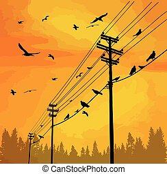 electricidad, alambre, postes, aves