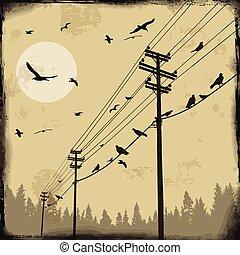 electricidad, postes, con, aves, en, alambre