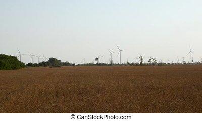 electricity., ensoleillé, clair, champ, écologique, ferme, harvesting., day., agriculture, récolte, turbines, local, amical, agriculture, converters, fond, eco, bleu, vent, 4k., énergie, blé vert, ciel