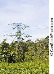 Electricity Pylon in Jungle, Brunei