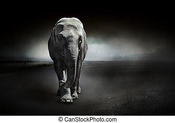 elefant, auf, a, dunkler hintergrund
