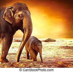 elefant, moeder en baby, buitenshuis