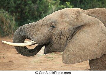 elefant, mond, romp