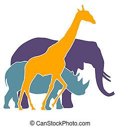 elefant, neushoorn, giraffe