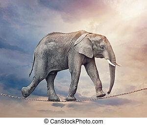 elefant, op, een, tightrope
