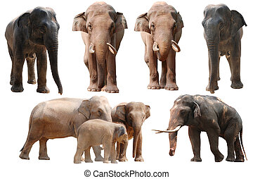 elefant, sammlung