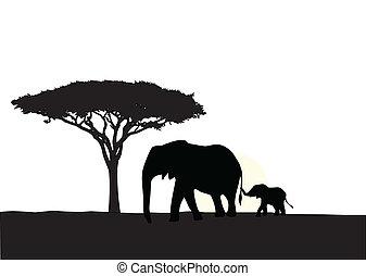 elefante africano, con, bebé, silhouet