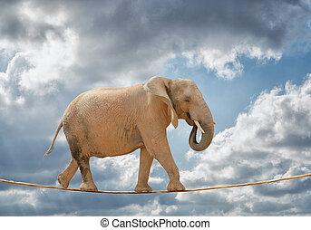 elefante, andar, ligado, corda