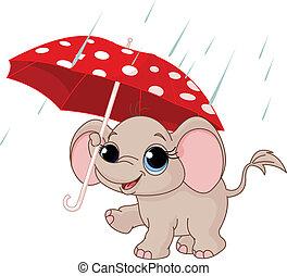 elefante, bebé, lindo, debajo, paraguas