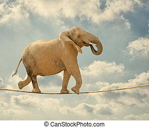 elefante, camminare, su, corda