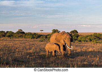 elefante, con, bambino, o, vitello, in, savana, a, africa