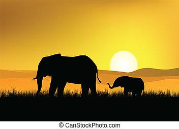 elefante, en, el, salvaje