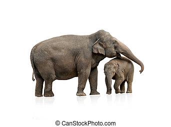 elefante, femmina, con, bambino, isolato