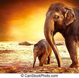 elefante, madre bambino, fuori
