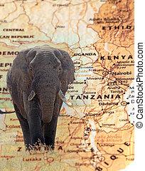 elefante, overlying, un, vendimia, mapa, de, tanzania