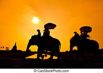 elefante, siluetas, en, rural, tailandia