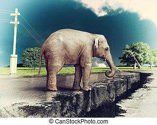elefante, sobre el calle