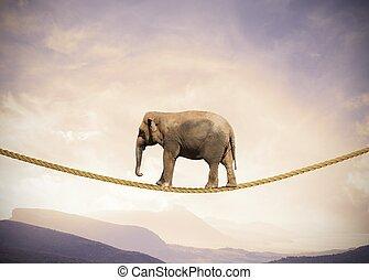 elefante, su, uno, corda