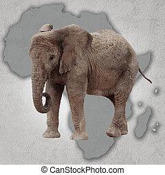 elefante, y, áfrica