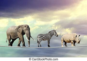 elefante, zebra, rinoceronte, camminare, su, uno, corda
