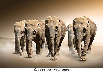 elefanten, herde