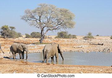 elefanter, hos, okaukeujo, waterhole