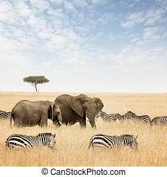 elefanter, og, zebraer, ind, den, masai mara