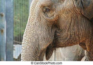 elefantes, cicatrizarse