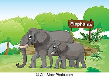 elefantes, con, un, de madera, signage, en, el, espalda