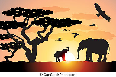 elefantes, em, áfrica