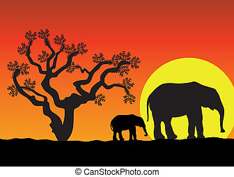 elefantes, en, áfrica