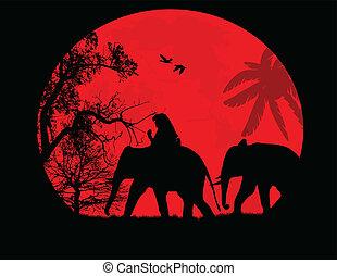 elefantes, en, tailandia, encima, ocaso